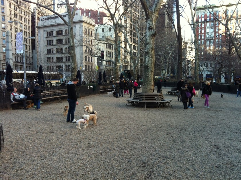 Madison Square Park Dog RUn 2