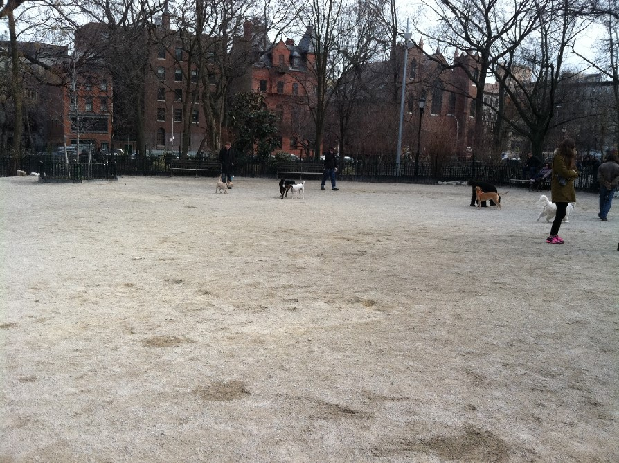 Tomkins Square Park Dog Run BF2
