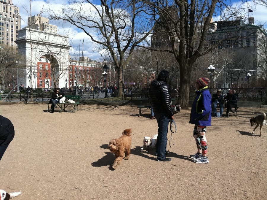 Washington Square Park Dog Run BF11