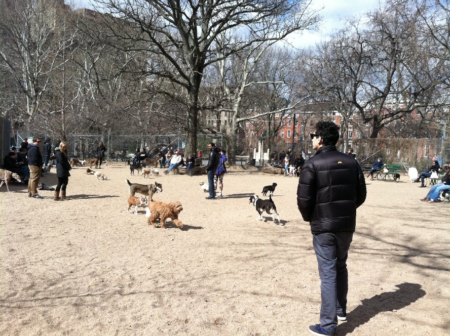 Washington Square Park Dog Run BF22