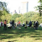 central park dogs 2