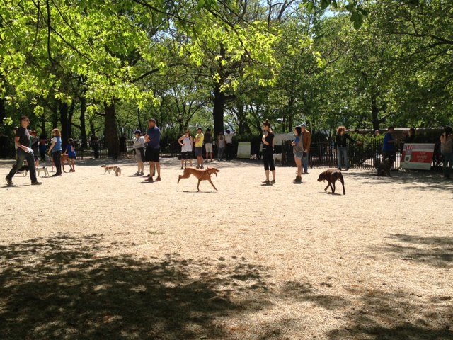 105th Street DOg Run RIverside