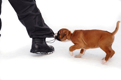 Puppy Play Biting Nyc Dog Resources
