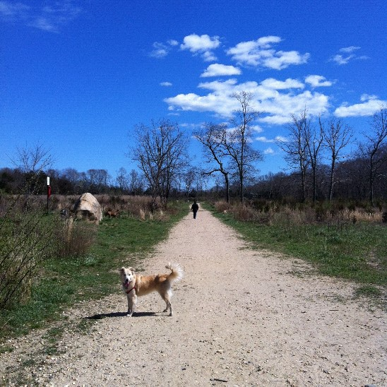 springs dog park trail