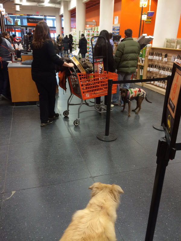 Are Dogs Allowed in Home Depot in NYC? Is it dog friendly? | NYC Dog Home Depot Glendale Ny on home depot glendale ca, panera bread glendale ny, sports authority glendale ny, home depot philadelphia pa,