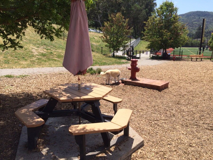 red hill dog park seating2